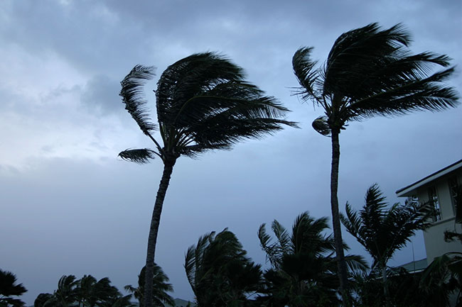 Tropical Strom Palm Trees in wind
