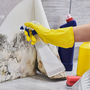 BLOG_Mold is a costly problem that can creep up in your home if you arent proactive_thumb